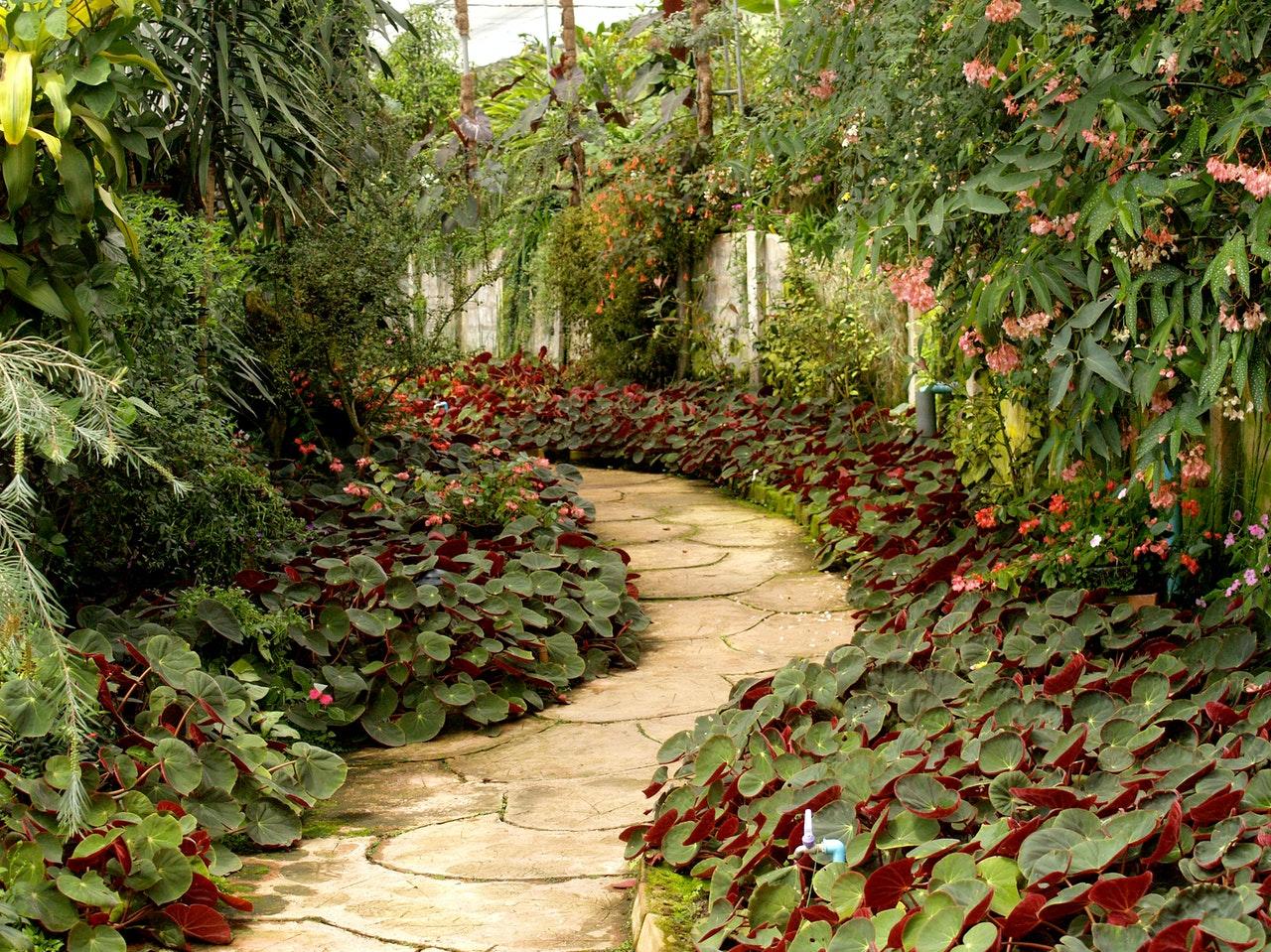 a pathway across a garden